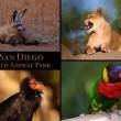 San Diego Wild Animal Park